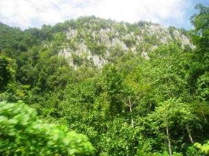 Utsikt över den täta djungeln och bergen