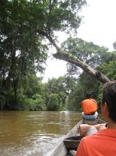 Träd och grenar hängde över floden